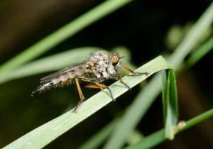 Borreliose Übertragung Insekten