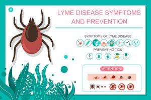 Vorbeugung von Symptomen von Zeckenstichen und Lyme-Borreliose